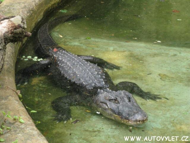 Krokodýl - Zoo Ústí nad Labem