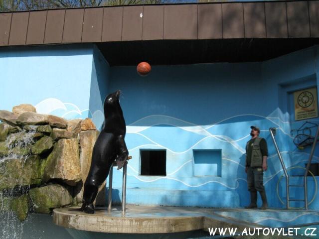 Lachtan - Zoo Ústí nad Labem