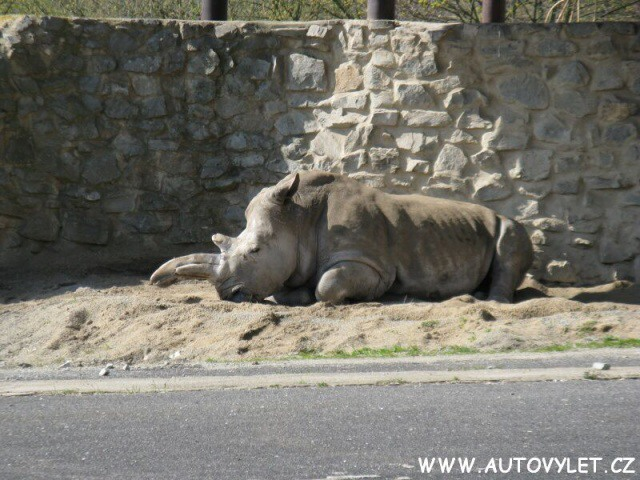 Nosorožec - Zoo Ústí nad Labem
