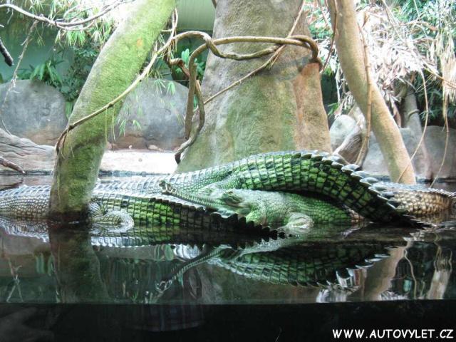 Krokodýli - Zoo Praha