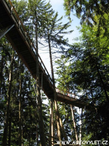 Stezka v korunách stromů Německo 3