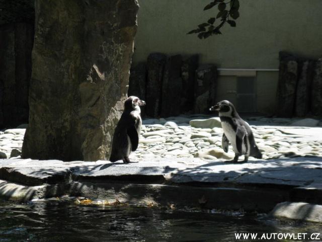 Tučňáci - Zoo Praha