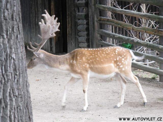 Zoo Ohrada 2