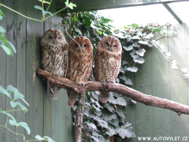 Zoo Ohrada 3