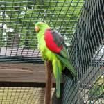 Zoo Ohrada 7