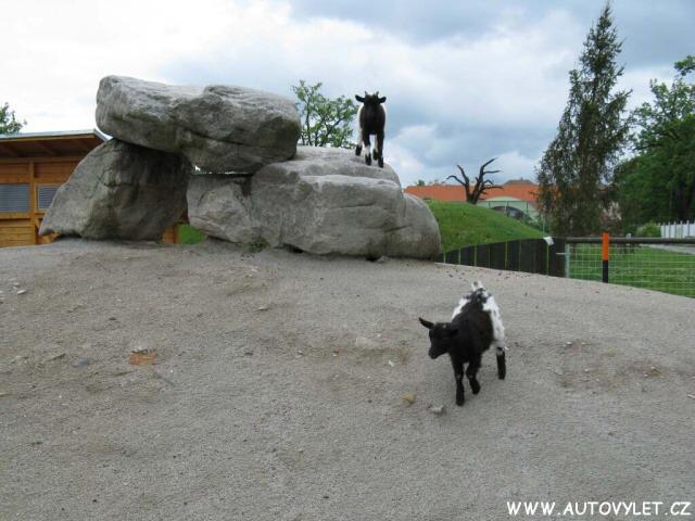 Zoo Ohrada 26