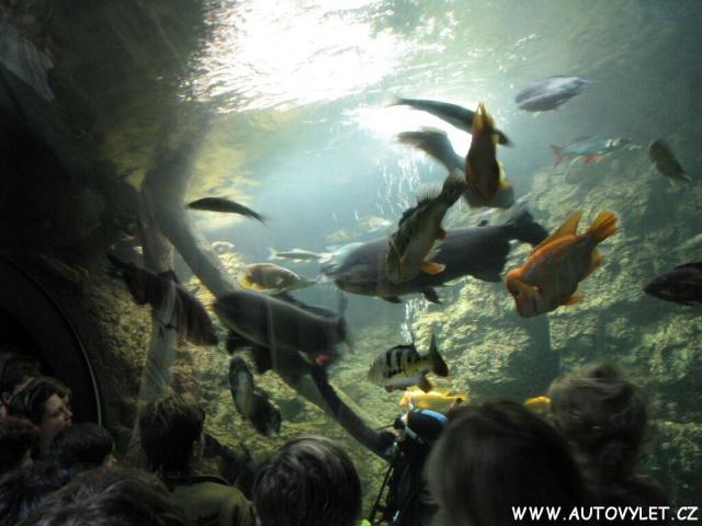 Obří akvárium Hradec Králové 2