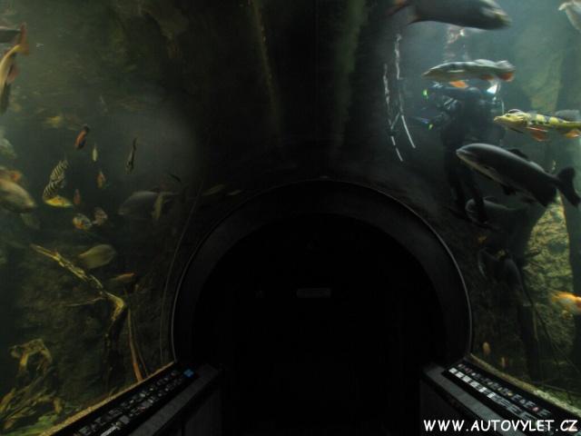 Obří akvárium Hradec Králové 9