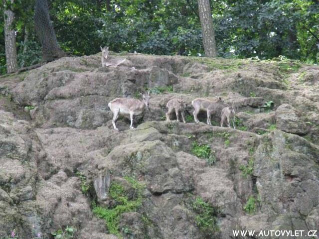 Zoo Liberec 12