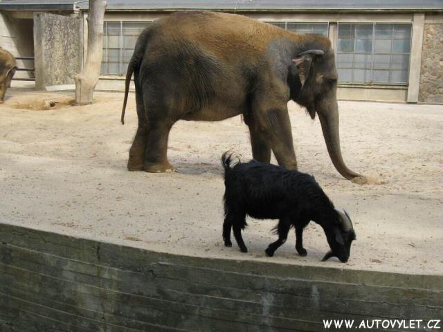 Zoo Liberec 16