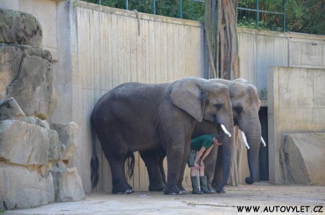 Zoo Drážďany 7