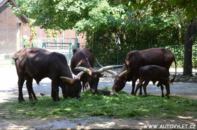 Zoo Drážďany 27