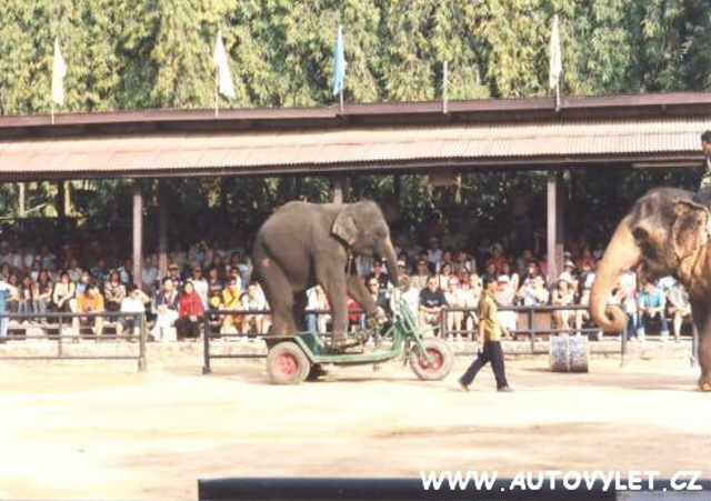 Thajsko sloní show 5