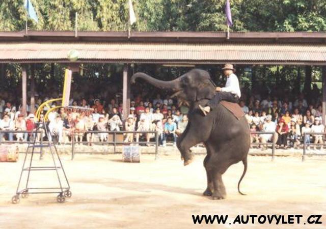 Thajsko sloní show 6