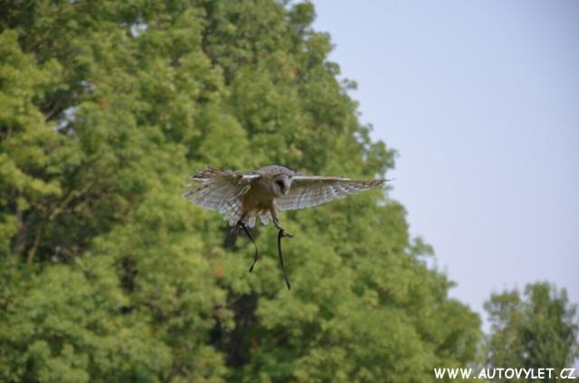 Seiferos – letové ukázky dravců a sov 18