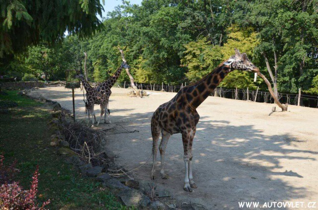 Zoo Lešná Zlín 2