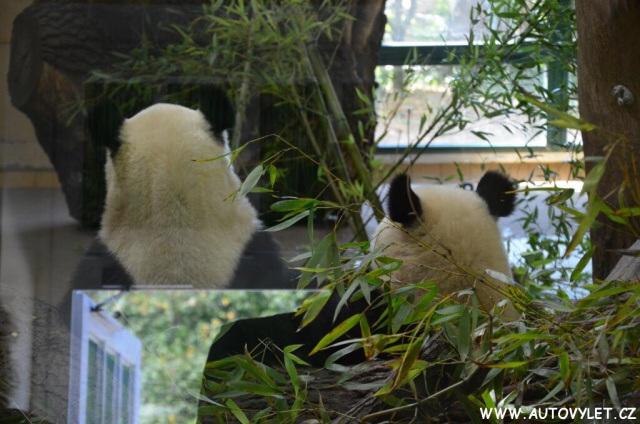 Zoo Vídeň Schonbrunn 6