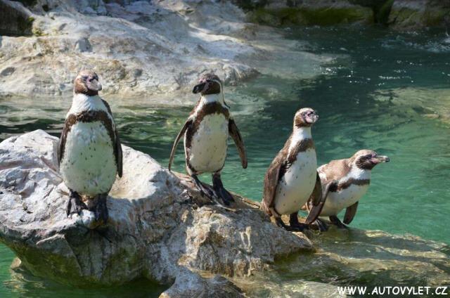 Zoo Vídeň Schonbrunn 15