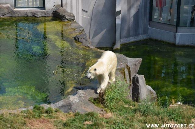Zoo Vídeň Schonbrunn 21