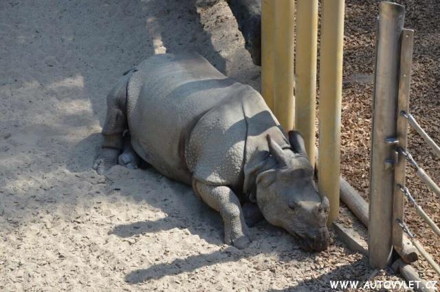 Zoo Vídeň Schonbrunn 27
