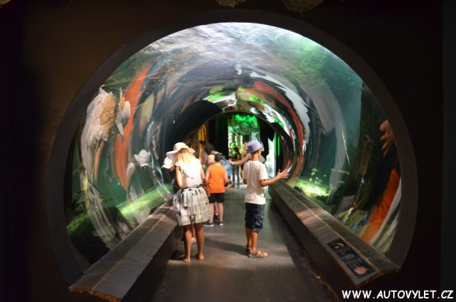 Zoo Vídeň Schonbrunn 70