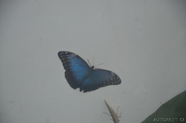 Motýlí dům Diana Karlovy Vary 4