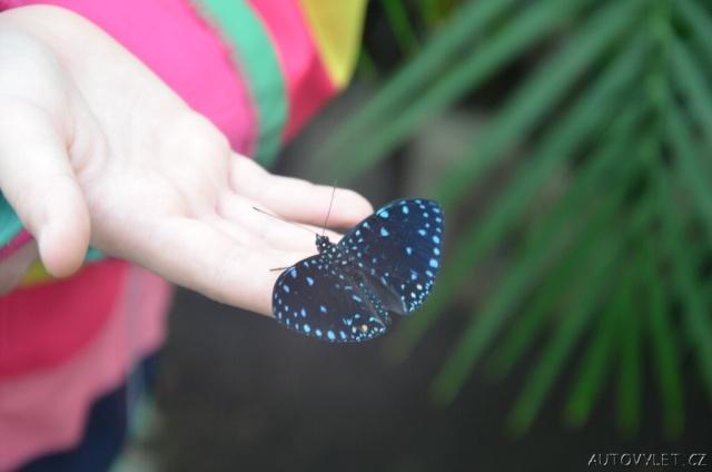 Motýlí dům Diana Karlovy Vary 12