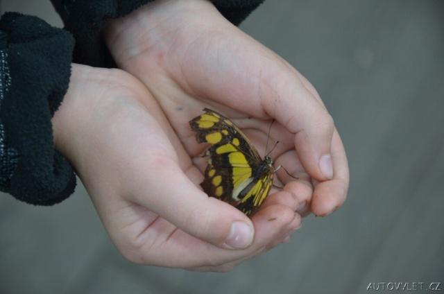 Motýlí dům Diana Karlovy Vary 16