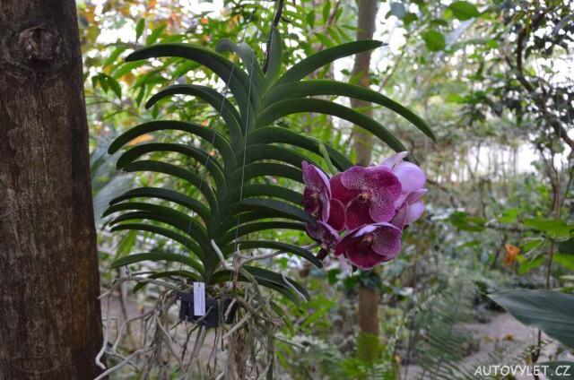 Botanická zahrada Teplice 41