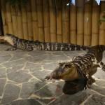 Krokodýlí zoo Praha Holešovice 7