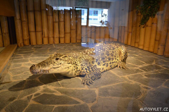 Krokodýlí zoo Praha Holešovice 22