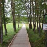 Cesta po dřevěných chodníčcích k Chalupské slati