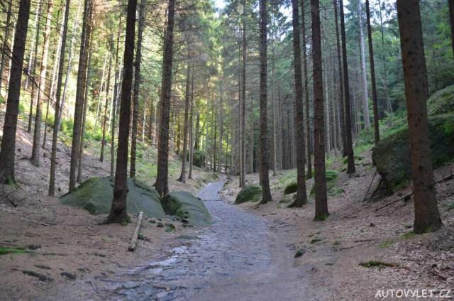 Pěšky lesem k Pravčické bráně
