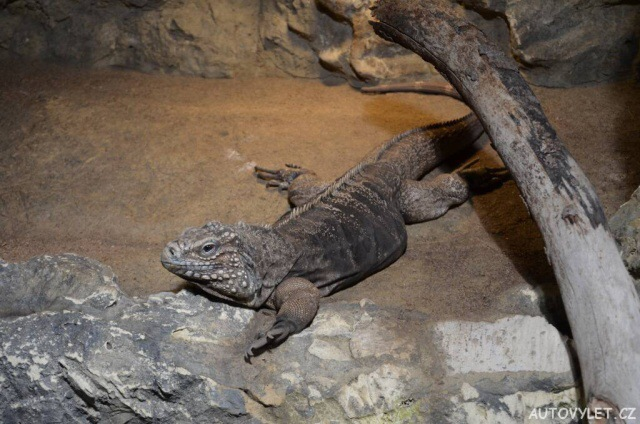 Zoo Děčín - Rajské ostrovy 11