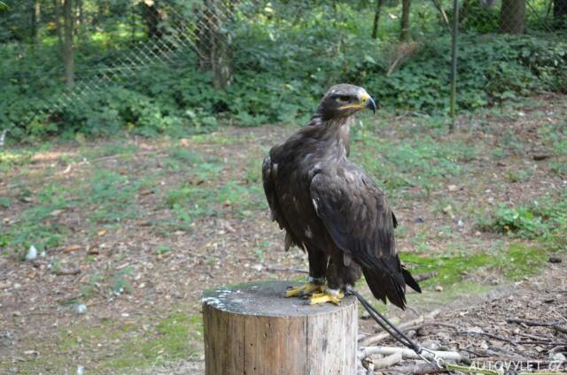 Zoo Olomouc - Svatý kopeček 6