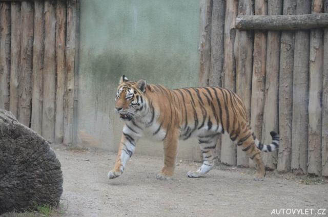 Zoo Olomouc - Svatý kopeček 31