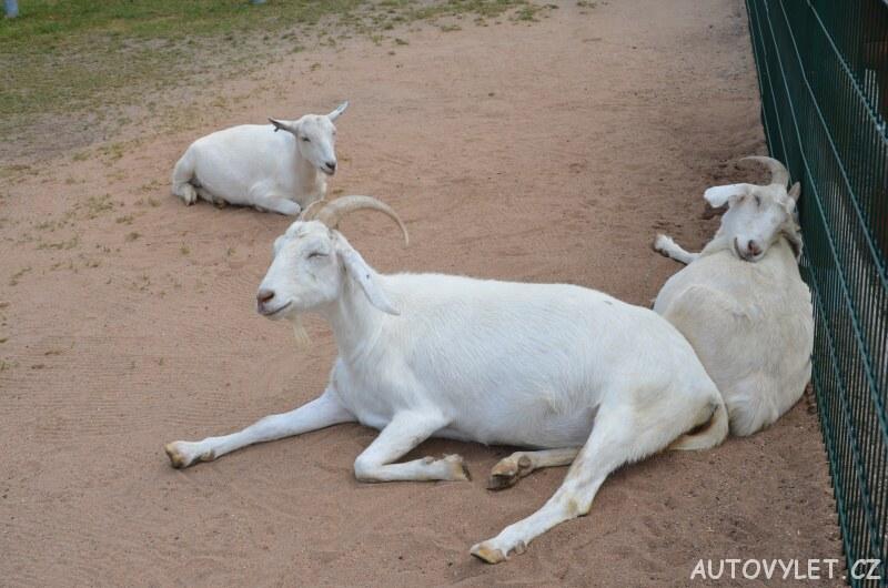 Zvířátkov - Fajnpark Chlumec nad Cidlinou