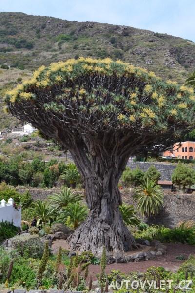 Tenerife dovolená - strom