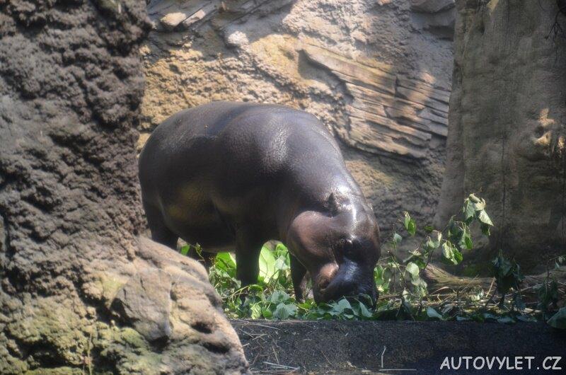 Hroch - Zoo Lipsko