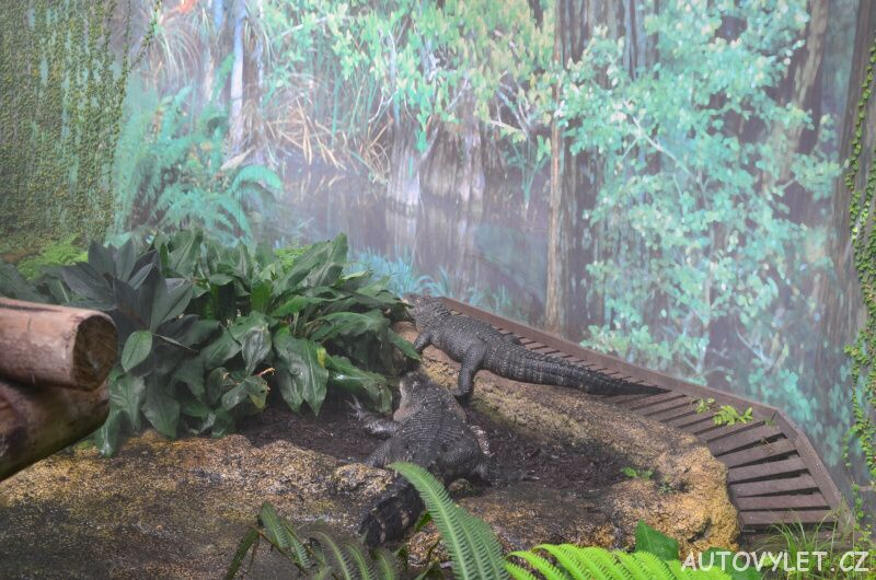 Krokodýli - Zoo Lipsko