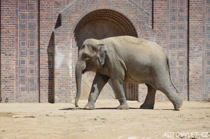 Slon - Zoo Lipsko