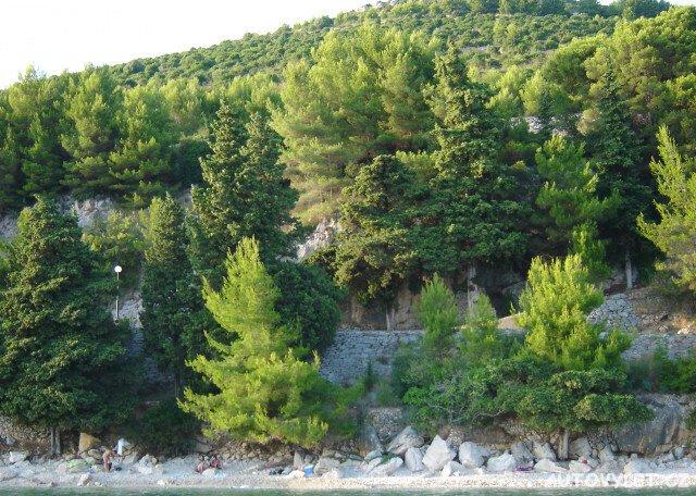 Zaostrog Chorvatsko - borovice na pobřeží