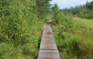 Soumarské rašeliniště - naučná stezka