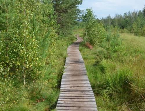 Naučná stezka Soumarské rašeliniště je prima procházka