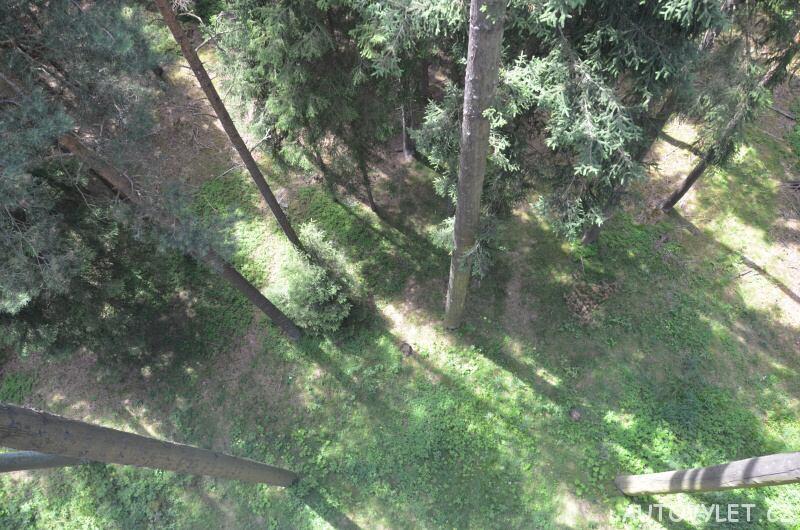 Stezka korunami stromů Lipno - stromy