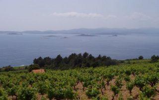Pelješac poloostrov Chorvatsko 5