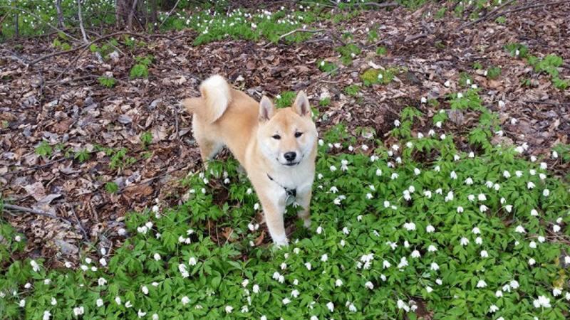 Bezručovo údolí - výlet se psem