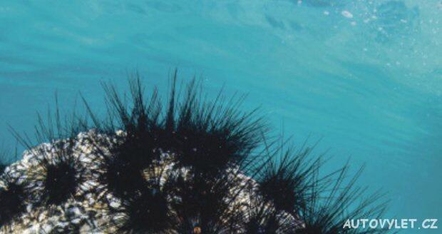 Mořský ježek v Chorvatsku