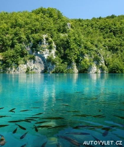 Plitvická jezera Chorvatsko - ryby