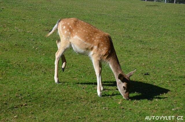 Srnka - Wildpark Osterzgebirge